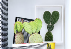 cactus woonplant van de maand augustus